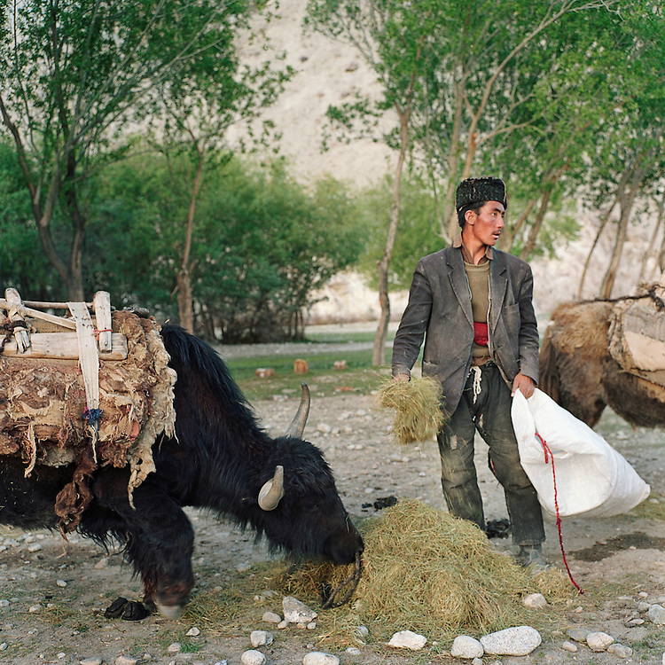 A Kyrgyz trader feeds his yaks in the village of Ghaz Khan in the Wakhan Corridor. He traveled down from the Pamir Mountains with men from his tribe to trade livestock for supplies when summer snow melts made the trip possible.