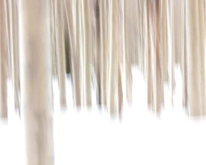 Slight intentional camera motion during the exposure creates an abstract image of a forest of aspen trees in several feet of fresh snow.
