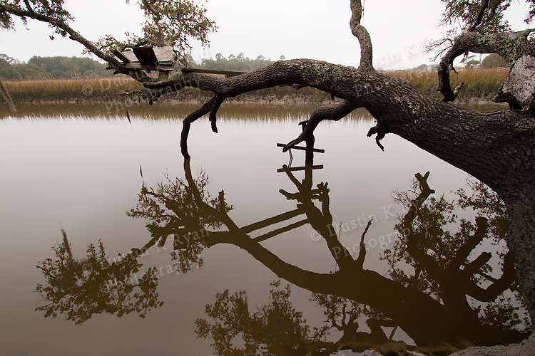 Reflections of a southern live oak tree in a tidal creek on the marsh lowcountry sc charelston south carolina Tree fort