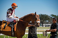 OLDSMAR, FLORIDA - FEBRUARY 11: Pazzaluna #7, ridden by Wilmer A. Garcia (orange hat), after winning the TVG Network race, at Tampa Bay Downs on February 11, 2017 in Oldsmar, Florida (photo by Douglas DeFelice/Eclipse Sportswire/Getty Images)