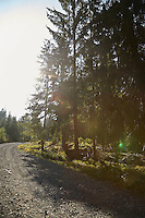 FOREST_LOCATION_90119