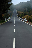 Empty road with slight mist descending over trees and road. El Hierro, Canary Islands.