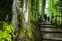 Walkway by the upper lakes, in the Plitvice Lakes NP, Croatia