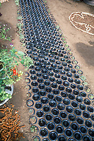Recycled garden pathway - using inverted old bottles to create a walkway! Fun for the kids. Container of cherry tomatoes. Sedum sempervivum succulent plants are planted in the bottle bottoms at the edges of the path.