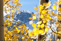 Aspen and mountains near Aspen, Colorado