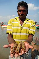 Shrimps and prawns, Pulicat Lake, India