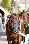 Denzel walking into the paddock at Del Mar Race Course in Del Mar, California on August 4, 2012.