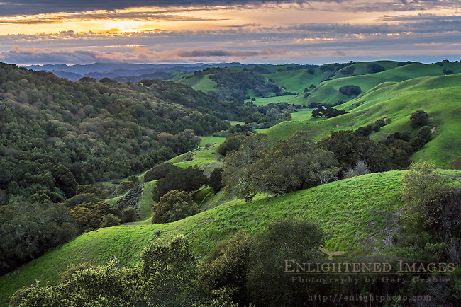 The rolling green hills of Briones Regional Park, Contra Costa County, California