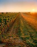 AUSTRIA, Oggau, sunrise over a vineyard South of town, Burgenland
