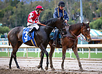 ARCADIA, CA MARCH 3: #3 Midnight Bisou with Mike Smith in the post parade before the Santa Ysabel Stakes (Grade III) on March 3, 2018 at Santa Anita Park in Arcadia, CA (Photo by Chris Crestik/ Eclipse Sportswire/ Getty Images)