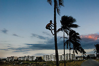 A young Cuban boy climbs a palm tree in front of the large concrete apartment blocks in Alamar, a huge public housing complex in the Eastern Havana, Cuba, 12 February 2009. About 50 years after the national rebellion, led by Fidel Castro, and adopting the communist ideology shortly after the victory, the Caribbean island of Cuba is the only country in Americas having the communist political system. Although the Cuban state-controlled economy has never been developed enough to allow Cubans living in social conditions similar to the US or to Europe, mostly middle-age and older Cubans still support the Castro Brothers' regime and the idea of the Cuban Revolution. Since the 1990s Cuba struggles with chronic economic crisis and mainly young Cubans call for the economic changes.