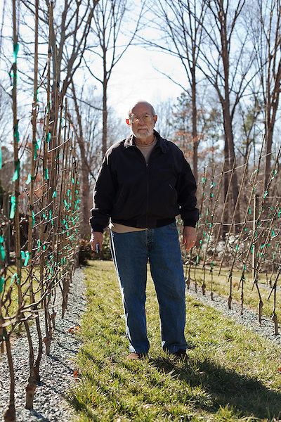 February 12, 2011. Pittsboro, NC.. Mr. Calhoun  in his young tree orchard. He has espaliered most of his collection, planting the trees quite close together, trained to wires, and keeping them pruned and at a 45 degree angle, which makes them flower and fruit more efficiently. .Lee Calhoun, 77, has spent over 30 years collecting old southern apple varieties and planting them in his orchard in hopes of sustaining the breeds.