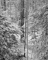&quot;Light Snow In The Forest&quot; <br /> Great Smoky Mountains National Park, Tennessee<br /> <br /> This photo was taken a couple of hundred yards behind the Sugarlands Visitor Center shortly after light snow fell. The sky was bright enough to illuminate the scene well so the film was exposed and developed normally. The high resolution print looks especially &quot;crisp&quot; which a scene such as this requires.