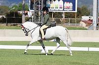 Graduate Small Pony