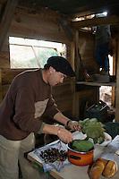 Europe/France/Aquitaine/40/Landes/Escalans:Avec Jean Barrère à  sa Palombière de la Ganaderia de Buros préparation de la cuisson des châtaignes avec des  feuilles de figuier pour le repas de chasse
