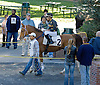 Sey Spottsproof before The Arabian Claiming Crown at Delaware Park on 10/13/12