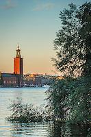 Träd på Söder Mälarstrand i förgrunden med Stadshuset över Riddarfjärden i Stockholm