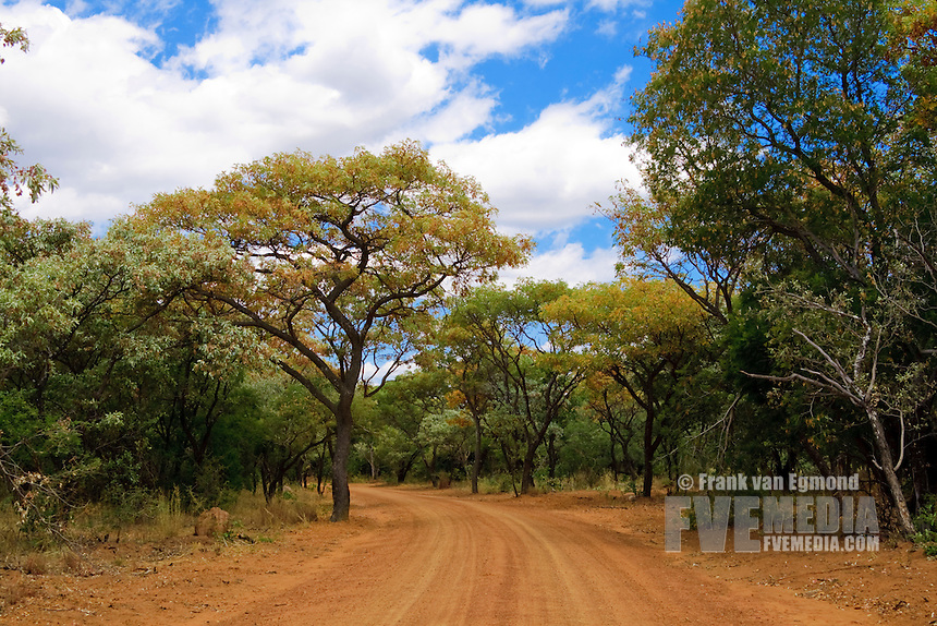 Dirtroad through the park..Marakele National Park, South Africa.