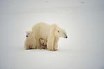 Polar Bear Exhibit Images