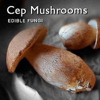 Ceps Mushrooms | Fresh Wild Ceps Food Pictures, Photos & Images
