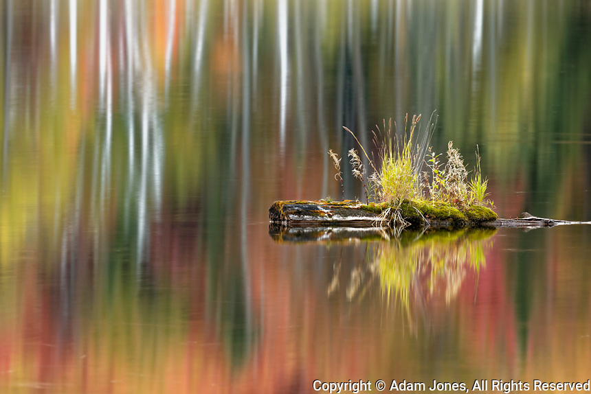 Tuft of grass on log, Red Jack Lake, Hiawatha National Forest, Upper Peninsula of Michigan.