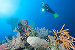 Gardens of the Queen, Cuba; a scuba diver hovers over a deep water pinnacle enveloped with colorful sponges, sea fans and encrusting corals