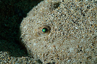 Iridescent eye of a Sole Fish (Solea vulgarilis) hiding in the sand on the bottom of Callelongue Creek, Marseille, France.