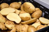 Potatoes peelings in a potato QC lab