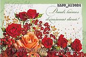 Maira, FLOWERS, BLUMEN, FLORES, photos+++++,LLPPA15024,#F#