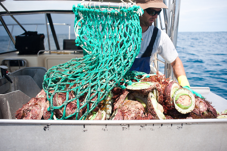 Abalone fishing of the cost of Kangaroo Island with Hot Dog Fisheries.