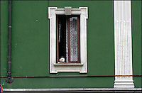 Milano, cane alla finestra<br /> Milan, dog at the window