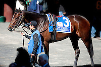Millionreasonswhy stands in the paddock prior to the Comely Stakes on Wood Memorial day at Aqueduct race track in Ozone Park NY, on April 7, 2012 .