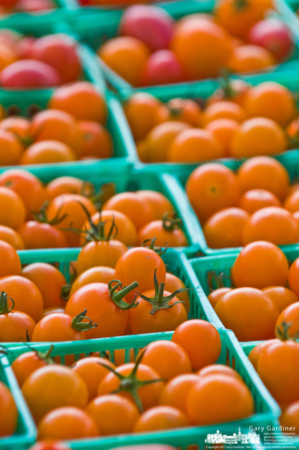 Yellow cherry tomatoes in baskets..