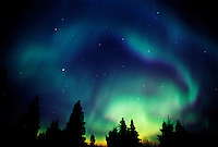 Northern lights or aurora borealis  and trees<br /> Birds Hill Provincial Park<br /> Manitoba<br /> Canada