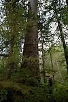 S etendant sur  400 km de cote entre Prince Rupert et le nord de l ile de Vancouver la foret du Grand ours protege plus de 65 000 km2 de nature pure. Plus de deux fois la superficie de la Belgique ! Dans les annees 1990, la region a fait l objet d une bataille politique entre les environnementalistes et l industrie du bois. Aujourdhui protegée des coupes sauvages, la foret pluviale et lours esprit sont de nouveau menaces. Un gigantesque projet doleoduc pour acheminer les sables bitumineux dAlberta jusqu'au port de Kitimat est en cours d'etude. Avec a la cle des petroliers geants qui navigueraient en plein coeur de la foret pluviale du Grand Ours.The maze of fjord and islands of the Great bear Rainforest - 250 miles of coasts between Prince Ruppert town and the north coast of Vancouver island is threathend by a gigantic oleoduc project.