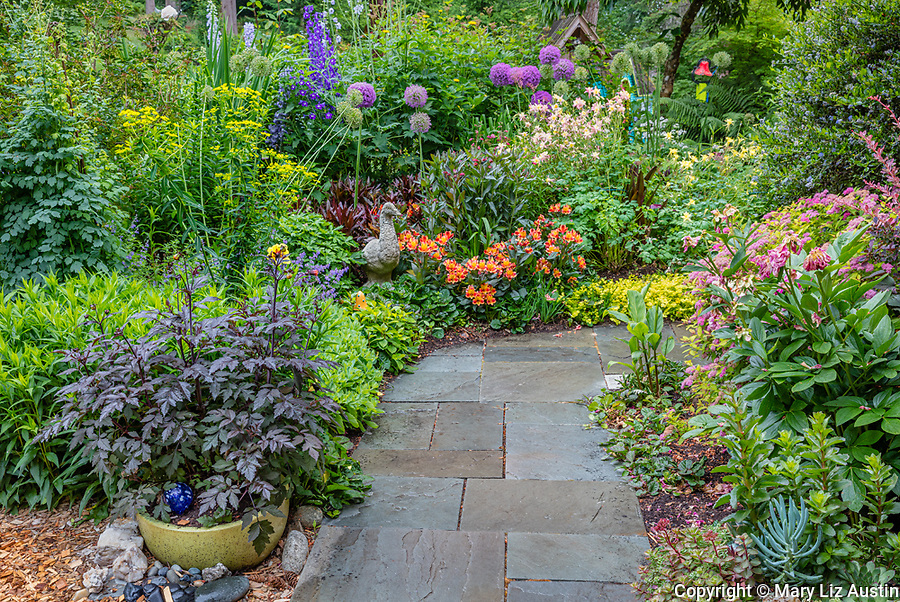 Vashon-Maury Island, WA: Flagstone pathway through a summer perennial garden featuring dahlias. peonies; alstromeria; sedum; delphimium and allium