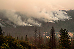 Railroad Fire started on Tuesday August 29, 2017.  The fire grew to 12,407 acres between the communities of Sugar Pine and Fish Camp along State Route 41 just outside of Yosemite National Park. The fire threatened Nelder Grove a grove of Giant Sequoias.  I wasn't available for the start of the Railroad fire but I went to check Nelder Gove on September 4, 2017.  Photo by Al Golub/Golub Photography