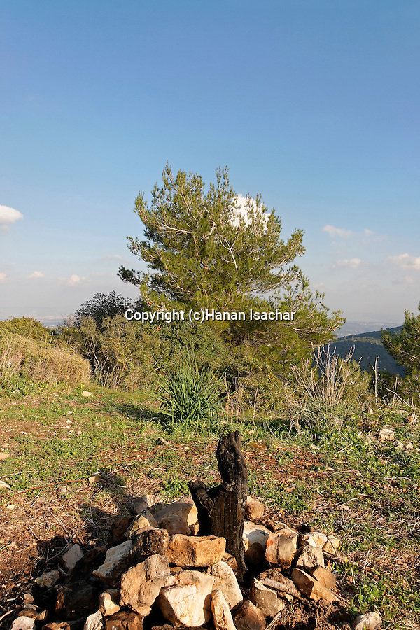 Mount Carmel. A burned tree