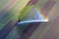 Bewaesserung von Salat: EUROPA, DEUTSCHLAND, SCHLESWIG-HOLSTEIN, (EUROPE, GERMANY), 24.06.2010: Bewaesserung von Salat, Aufwind- Luftbilder - Stichworte: Wasser, Bewaesserung, Wachstum ,  globale, Erwaermung, Erderwaermung, Klima, Klimawandel, sprengen, Sprenger, Feld, Fraucht, Salat, Regenbigen, gruen,  bewaessern, Hitze, Sommer, Bewaesserung,  Rasensprenger, Trockenheit, trocken, Wasser .c o p y r i g h t : A U F W I N D - L U F T B I L D E R . de.G e r t r u d - B a e u m e r - S t i e g  1 0 2,  .2 1 0 3 5  H a m b u r g ,  G e r m a n y.P h o n e  + 4 9  (0) 1 7 1 - 6 8 6 6 0 6 9 .E m a i l      H w e i 1 @ a o l . c o m.w w w . a u f w i n d - l u f t b i l d e r . d e.K o n t o : P o s t b a n k    H a m b u r g .B l z : 2 0 0 1 0 0 2 0  .K o n t o : 5 8 3 6 5 7 2 0 9.V e r o e f f e n t l i c h u n g  n u r    m i t  H o n o r a r  n a c h  MFM, N a m e n s n e n n u n g und B e l e g e x e m p l a r !.