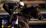 October 29, 2019 : Breeders' Cup Distaff entrant Wow Cat, trained by Chad C. Brown, exercises in preparation for the Breeders' Cup World Championships at Santa Anita Park in Arcadia, California on October 29, 2019. Carolyn Simancik/Eclipse Sportswire/Breeders' Cup/CSM