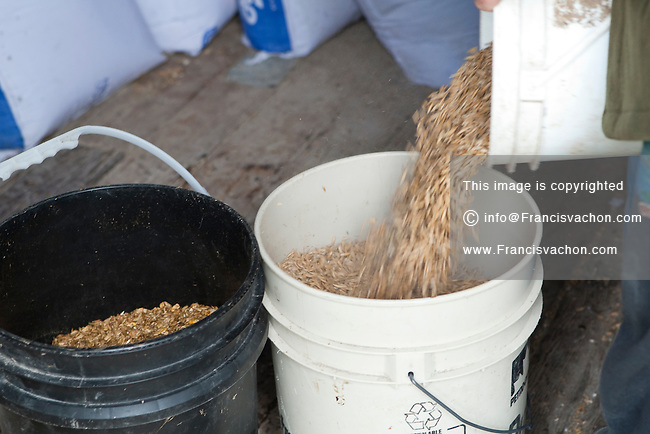 Yves Breton pours a mix of oat, barley and corn to feed his horses in Saint-Laurent, Manitoba Monday May 23, 2011.