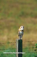 01110-00514 Common Barn-Owl (Tyto alba) on fence post  Prairie Ridge SNA Jasper Co.  IL