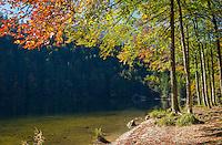 Austria; Styria; Styrian Salzkammergut; Ausseer Land, near Goessl am Grundlsee: autumn scene at Lake Toplitzsee | Oesterreich, Steyrisches Salzkammergut, bei Goessl am Grundlsee: Herbststimmung am Toplitzsee