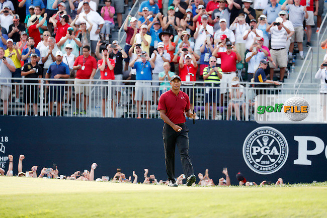 Tiger Woods (USA) walks off the green after making a birdie putt on the 18th hole during the final round of the 100th PGA Championship at Bellerive Country Club, St. Louis, Missouri, USA. 8/12/2018.<br /> Picture: Golffile.ie | Brian Spurlock<br /> <br /> All photo usage must carry mandatory copyright credit (© Golffile | Brian Spurlock)
