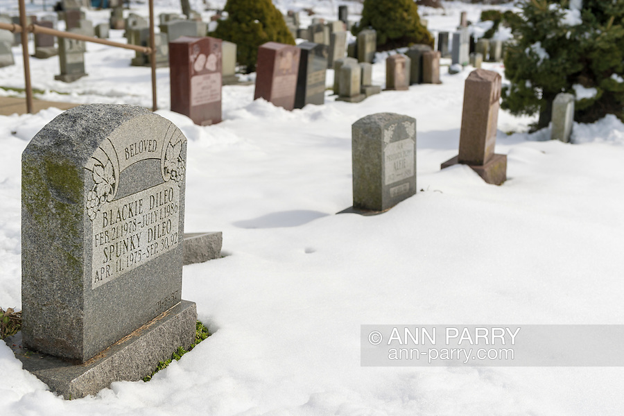 Wantagh, New York, USA. February 7, 2016. President Nixon's famous dog Checkers, the cocker spaniel, is buried in the large pet cemetery next to Last Hope Animal Rescue and Rehabilitation building. During Hallmark Channel Kitten Bowl III, Last Hope had an Open House where guests watched the pretaped game on TV and cheered for their team, the Last Hope Lions. Over 100 adoptable kittens from Last Hope Inc and North Shore Animal League America participated in the games for the 2016 championship, which first aired the day of Super Bowl 50.