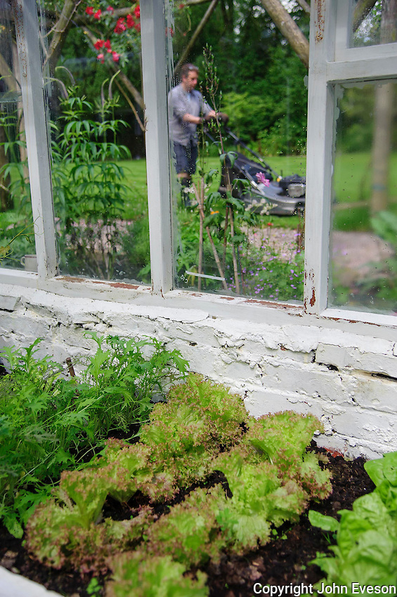 Man mowing a lawn with greenhouse, Chipping, Lancashire.