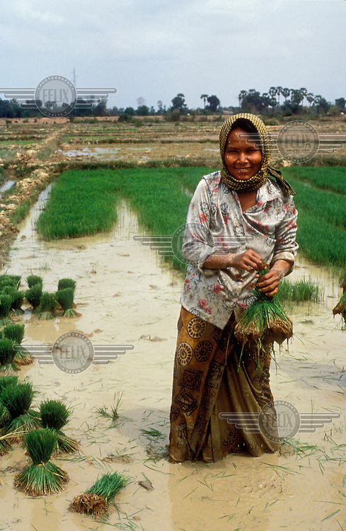 Peasant woman collecting rice shoots to then be transplanted, part of the labour intensive process of rice production.