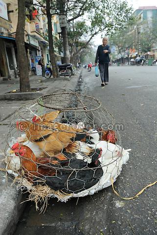 Asia, Vietnam, Hanoi. Hanoi old quarter. Live chicken in a transport cage.
