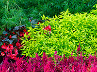 Garden plants creates patterns and color contrasts at Cantigny Gardens, DuPage County, Illinois