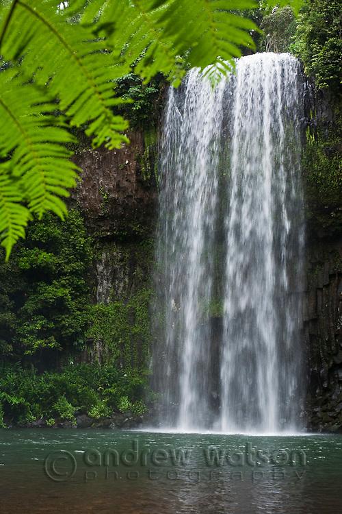 Millaa Millaa Falls.  Atherton Tablelands, Queensland, Australia